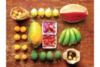 Caja de frutas Lujo (approx. 7/9 kgs)